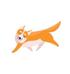 friendly cartoon welsh corgi dog breed flat vector image
