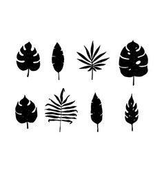 hand drawn tropical leaves vector image