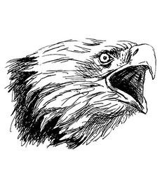 Hand sketch head bald eagles vector image