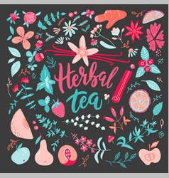 Herbal tea big set vector