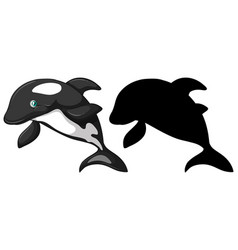 Killer whale characters and its silhouette on vector