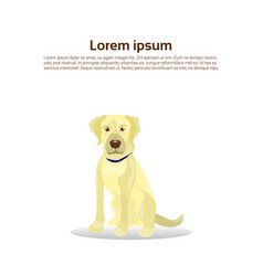 labrador retriever dog icon isolated on white vector image