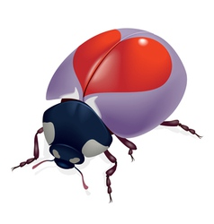 red heart bug vector image