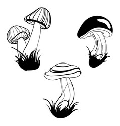 set of mushrooms collection of stylized vector image