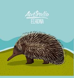 australia echidna poster in outdoor scene on vector image