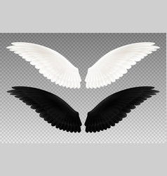 black and white wings transparent set vector image