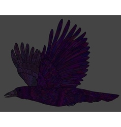 Flying raven with high details vector image