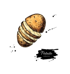 Potato drawing Isolated hand drawn vector