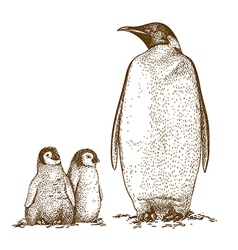 engraving penguins vector image vector image