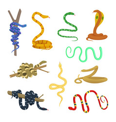 cartoon pictures of different snakes and reptiles vector image