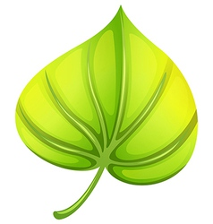 A heart-shaped leaf vector image