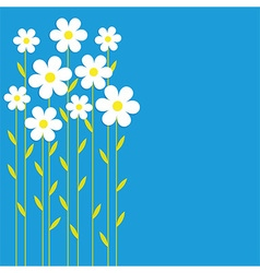 Background chamomile vector image