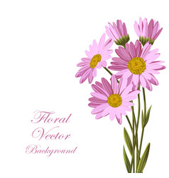 Beautiful pink daisies vector
