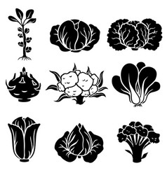 Cabbage silhouette icon set vector