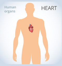 location of the heart in the body the human vector image