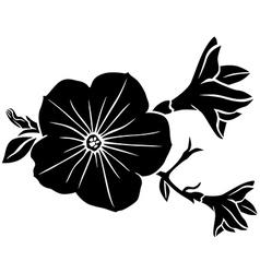 petunia vector image