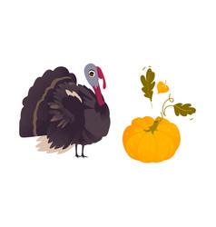 farm hen turkey and ripe orange pumpkin vector image