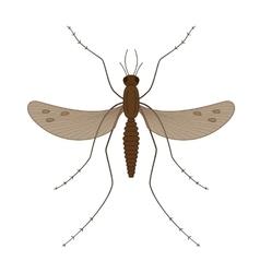 Nature mosquitoes stilt disease transmitter vector image
