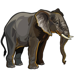African elephant profile vector