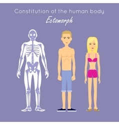 Constitution of human body ectomorph ectomorphic vector