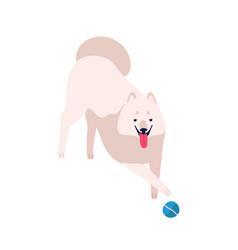 cute cartoon playful samoyed dog flat vector image