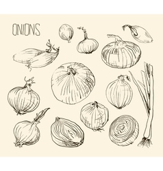 Onion set vector