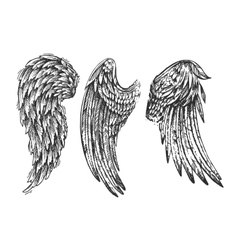 wings of bird vector image