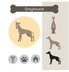 Greyhound dog breed infographic vector
