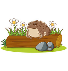 isolated picture big toad on log vector image