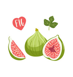 Set of hand drawn figs fruits vector