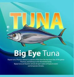 big eye tuna vector image