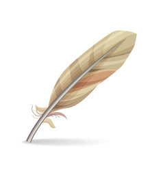 Feather isolated vector