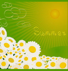 Summer chamomile flowers in field vector