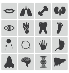black anatomy icons set vector image