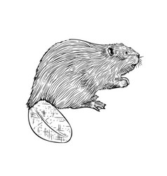 Beaver in hand drawn style vector