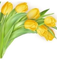 Bouquet of yellow tulips EPS 10 vector image