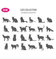 cat breeds icon set flat style isolated on white vector image