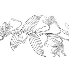 seamless brush from vanilla orchid flowers vector image