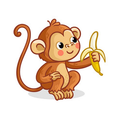 the monkey on a white background eats a banana vector image