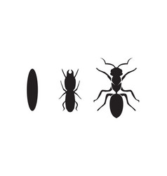 ant logo template design vector image