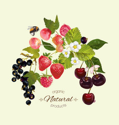 Berry mix composition vector
