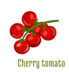 Cherry tomato vegetable icon vector