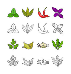 culinary herbs and spices vector image
