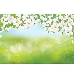 spring tree blossoming vector image vector image