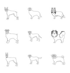 Dalmatian dachshund poodle and other web icon vector