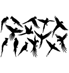 Parrot silhouettes on white vector