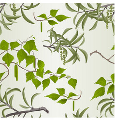 seamless texture willow branch with catkins vector image