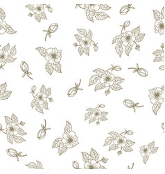 hand drawing peony flowers seamless pattern vector image