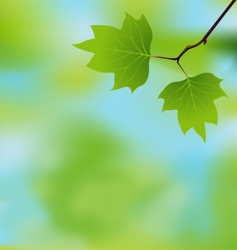 spring branch background vector image vector image