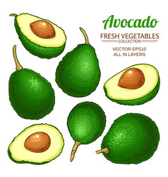 avocado set vector image